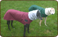 Greyhound Winter Coats